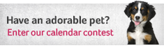 Adorable Pet Calendar Contest