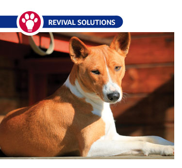 Controlling Osteoarthritis in our Pets