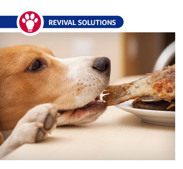 Preventing Digestive Problems in Dogs