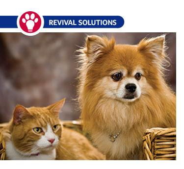 Osteoarthritis in Pets