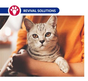 Cat Vaccine FAQs