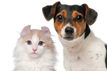 Reduce Stress in Dogs and Cats