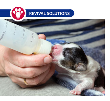 When Puppies and Kittens Need Milk Replacer
