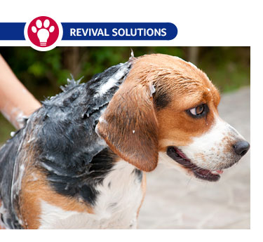 Treating Skin Conditions in Dogs and Cats