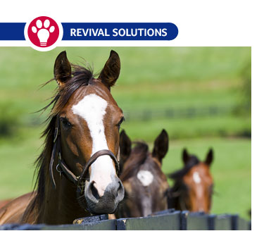 Vaccinating Your Horse