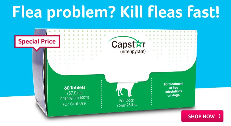 Flea problem? Kill fleas fast