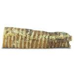 Windees Beef Trachea